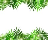 Fototapety Leaves of palm tree on white background