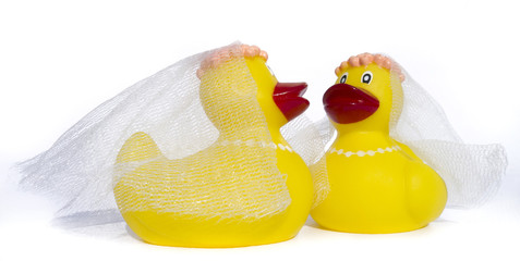 rubber ducky gay wedding on white background