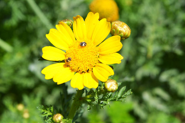 yellow daisy.orange spring flower with green leaf