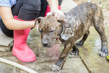 A dog taking a shower