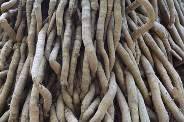 roots,tree,strong,green,background,texture,line,plant