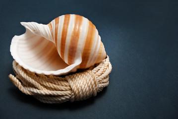 Seashelly.