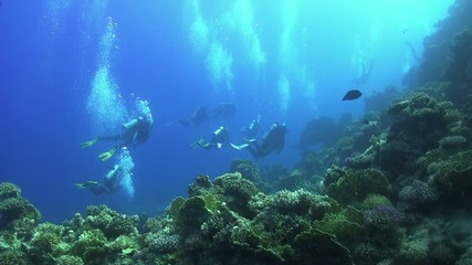 Group of Divers Swims Over Coral Reefs, Red Sea