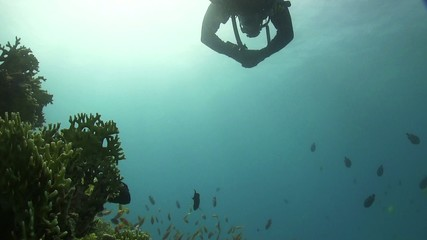 Diver Swims Over Coral Reefs, Red Sea