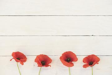 Mohnblumen mit weißem Hintergrund