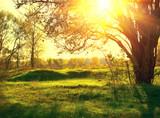 Nature landscape. Sunset scene