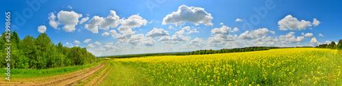 Zdjęcia na płótnie, fototapety, obrazy : Spring flower field