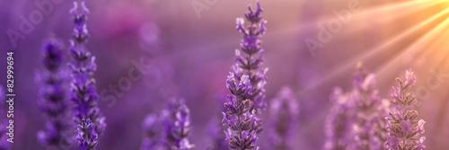 Lavender - 82999694