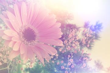 Retro Gerbera daisy image