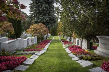 allée d'herbe au milieu des tombes fleuries et des arbres