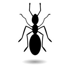 Ant - illustration