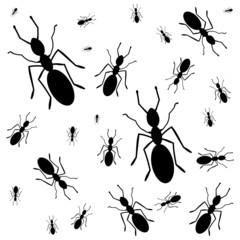 Ants everywhere - illustration