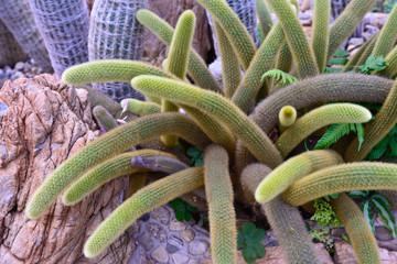 Closeup of cactus in the garden