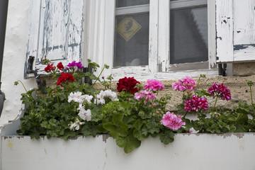 Pencere ve Çiçek
