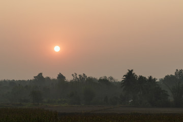 agriculture field  area with sunrise