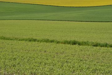 agriculture diversité
