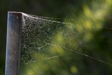 クモの巣フラッグ