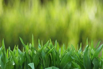 зеленая трава на фоне