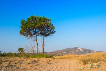 Tree in summer in Zakynthos island