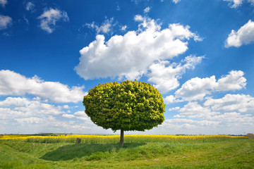 grüner einzelner Baum