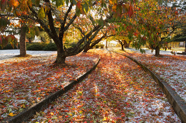 Beautiful autumn path lined autumn leaves and ice