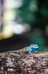 the  lizard on tree
