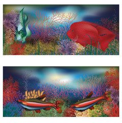 Underwater banners with red tropical fish, vector illustration