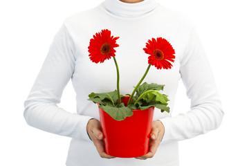 Holding daisy flowers