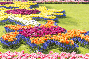 Blossoming spring flowers in Keukenhof, Holland, Netherlands