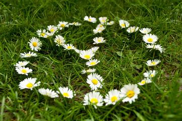 symbole paix et amour avec des marguerites dans l'herbe