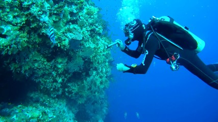 Diver looking at a coral reef, Red Sea, Egypt