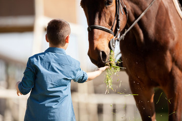 Child feeding beautiful brown horse