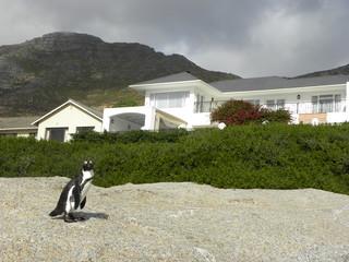 Pingouin dans le jardin