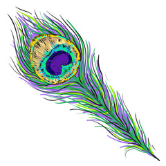 Vector peacock feather illustration isolated on white
