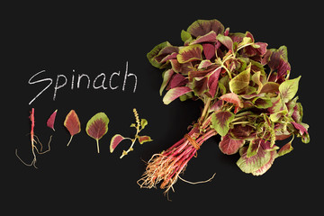 spinach red fresh vegetable organic blackboard