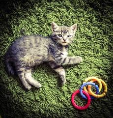 il gatto sul tappeto