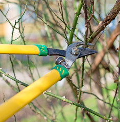 Pruning. Cutting branches at spring.