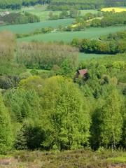 Wald und Wiesen bei Währentrup in Ostwestfalen-Lippe