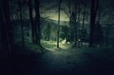 Ciemny las z drewnianym domem i polaną w tle