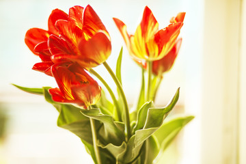 Bouquet of tulips on the window
