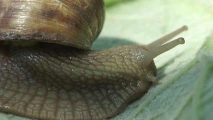 snail in the garden on the grass macro