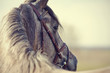 Obrazy na płótnie, fototapety, zdjęcia, fotoobrazy drukowane : Portrait of a sports stallion