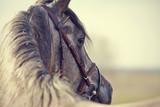 Portrait of a sports stallion - 83093816