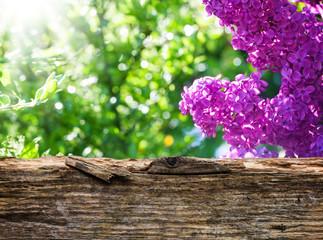 Flieder hinter Holzbrett
