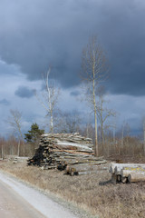 Landscape along the country road, felled trees