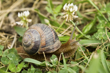 Snail on green garden
