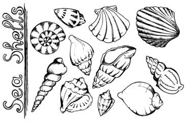 Sea shells vector monochrome isolated clip art set