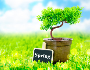 flowerpot and spring word on blackboard on green grass with blue