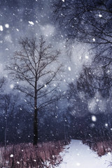 Winter Forest and Snowfall