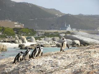 Pingouins sur la plage